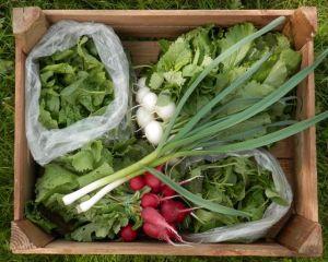 Zeleninová sezóna klepe na dveře